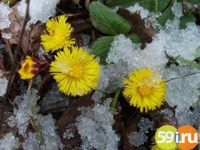 22апреля вПермском крае прошли обильные снегопады