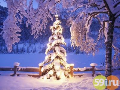 Новогодний фотоконкурс «Сохраним зеленую ель» в Перми