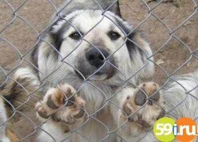 ВПерми истратят 30 млн руб. наотлов исодержание бездомных собак