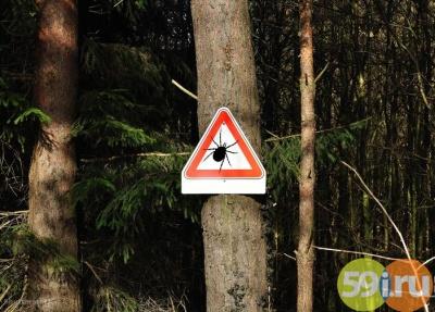 Стали известны самые опасные места клещевой активности вПрикамье
