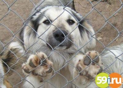 Мэрия Перми передала о вероятном строительстве нового приюта для собак